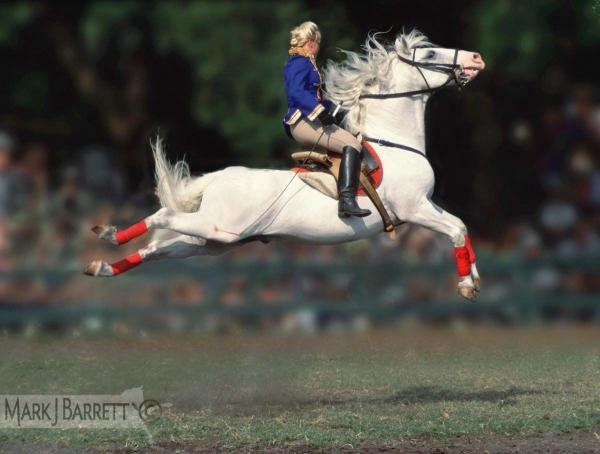 Woman performing Capriole on Lipizzaner horse.